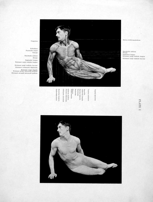El Arte en la Anatomía: fotozincografía científica. - elnidosingular ...
